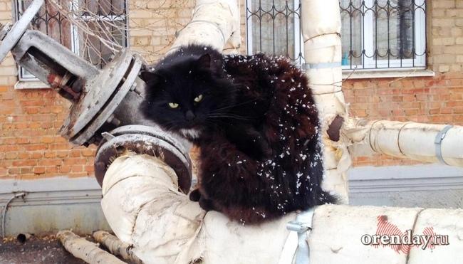 ВМатвеево-Курганском районе снят карантин, введенный из-за бешеной лисы