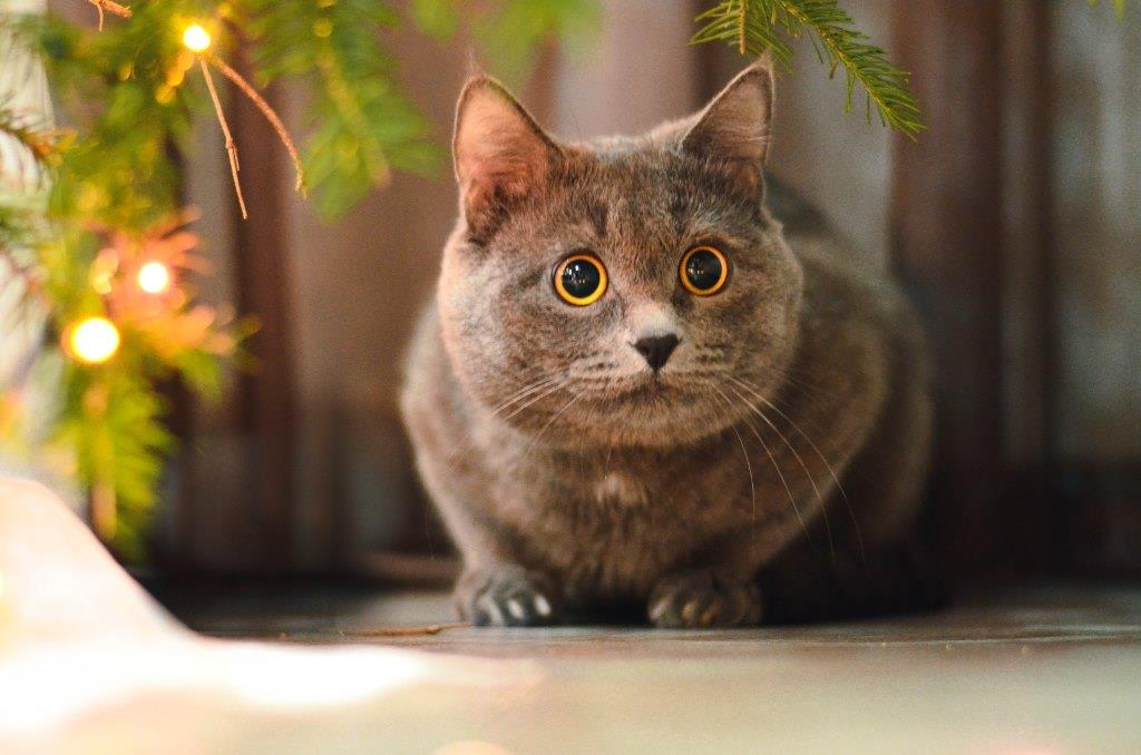 Кот ведёт себя как человек
