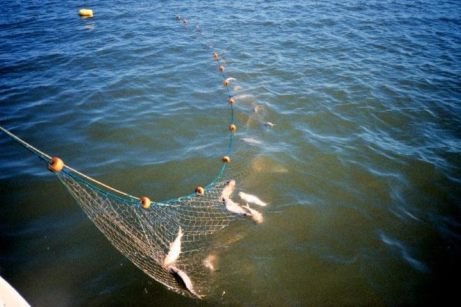 рыболовная суть